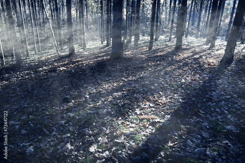 Fotografia  Scary haunted forest at night