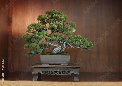 Aluminium Prints Bonsai Bonsai potted tree