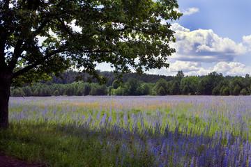 Panel Szklany Współczesny beautiful meadows