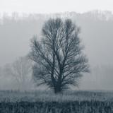 large tree - 73679722