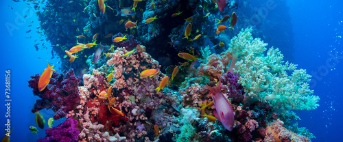 Poster Koraalriffen Colorful underwater reef with coral and sponges