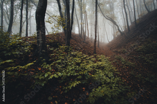 Foto op Plexiglas Landschappen autumn in foggy forest