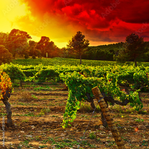 Papiers peints Vignoble Autumn in France