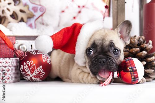 Foto op Plexiglas Franse bulldog puppy christmas French Bulldog
