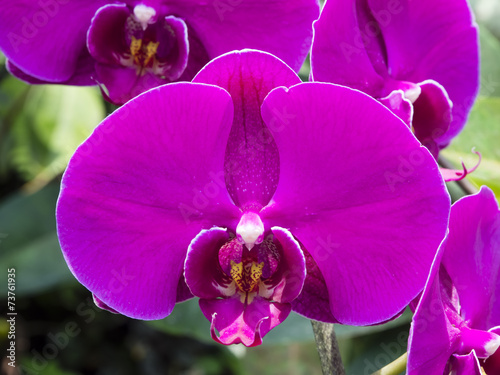 Orchid flower Pink color Close up