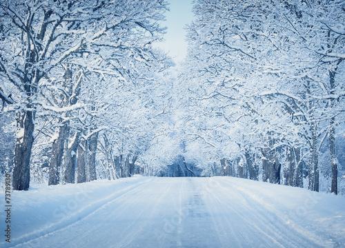 Fotobehang Wintersporten Alley in snowy morning
