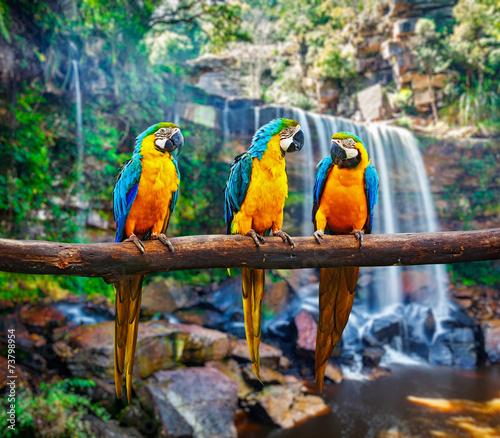 Naklejki papugi  niebiesko-zolta-ara-ara-ararauna