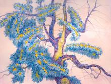 Old Tree Buckthorn