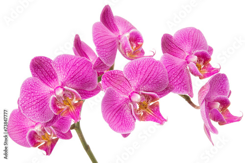 Obraz Orchid Flower - fototapety do salonu