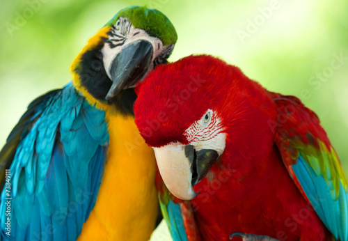 Αφίσα  parrots