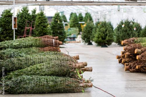 Cadres-photo bureau Jardin Christmas tree farm