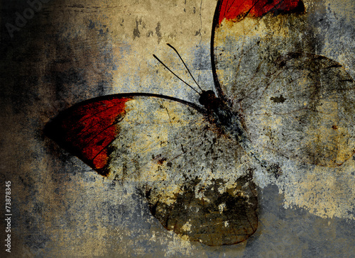 Canvas Prints Butterflies in Grunge butterfly