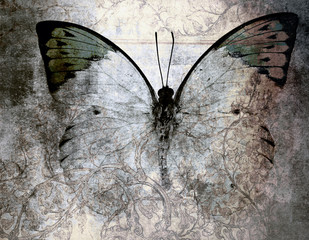 Panel Szklany Grunge butterfly