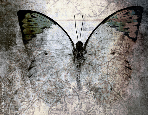 Printed kitchen splashbacks Butterflies in Grunge butterfly