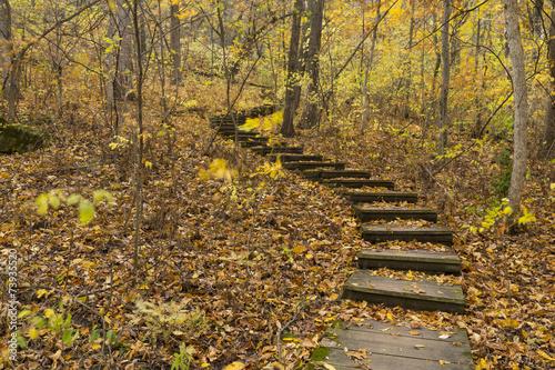 Fotografía  Step Trail In Woods