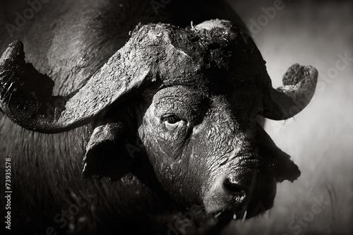 Keuken foto achterwand Buffel African buffalo bull Portrait