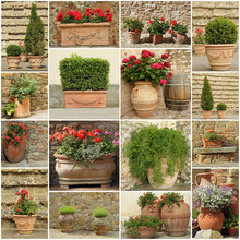 Collection Of Elegant Clay Planters With Flowers And Plants