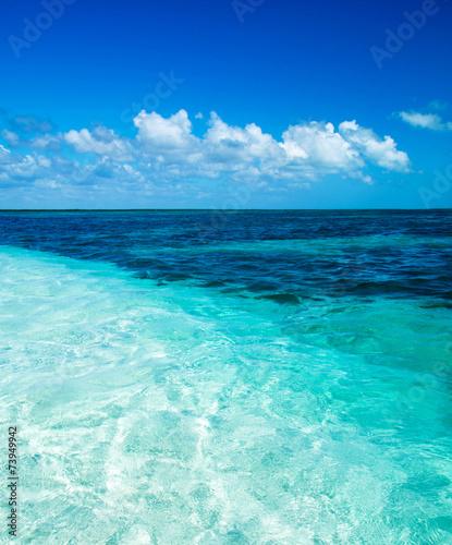Foto op Aluminium Groene koraal sea
