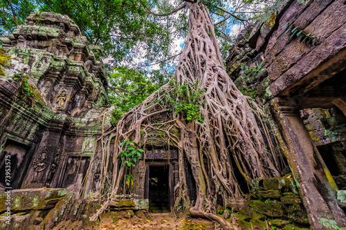 фотография  Panorama of ancient stone door and tree roots, Ta Prohm temple r