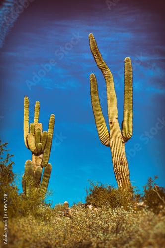 Papiers peints Cactus Saguaro Cactus Arizona