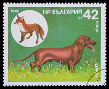 Series Hunting Dogs