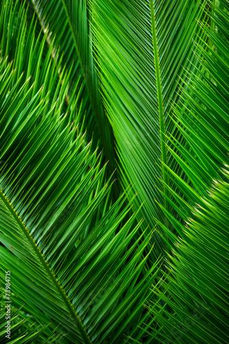 Papiers peints Palmier Palmenblätter