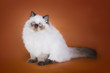 cat on a colored background isolated