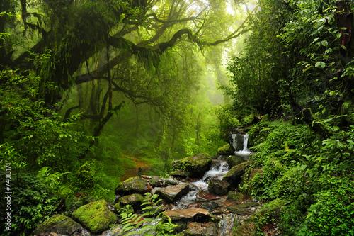 Fototapeta Dżungla Nepalu gęsta i zielona ścienna