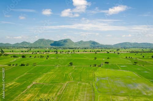 Fotobehang Rijstvelden landscape in the cornfield