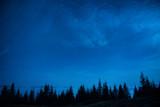 Las sosnowy na tle niebieskiego nieba nocą