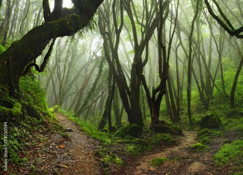 Photo  Selva Nepal