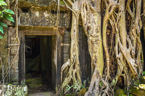 Photo  Ta Prohm Temple in Angkor Wat, Tomb Raider Temple, Cambodia