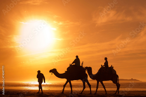 In de dag Marokko silhouettes of camels at sunset