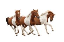 Three Skewbald Horses Gallopin...