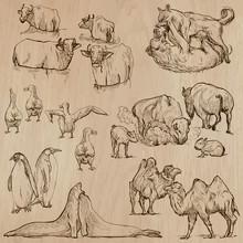 Animals Around The World (part 20). Hand Drawn Vector Pack.