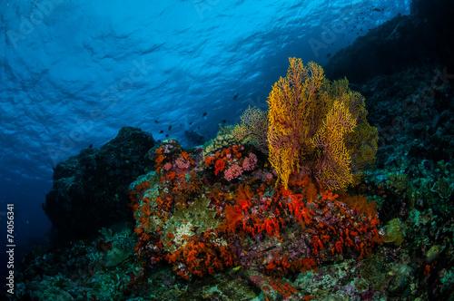 Fotomural Sea fan Subergorgia mollis in Banda, Indonesia underwater