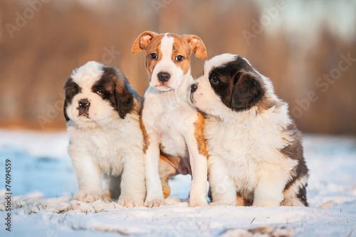 Keuken foto achterwand Retro Three puppies sitting on the snow in winter