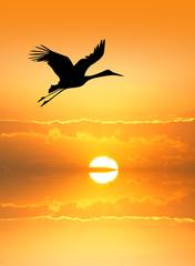 Fototapeta Ptaki Stork silhouette at sunset