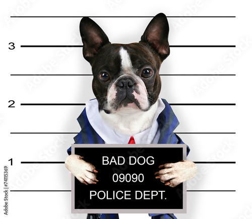 Fotografie, Obraz  a mugshot of a bad dog