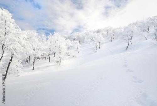 Fotografie, Obraz  雪化粧