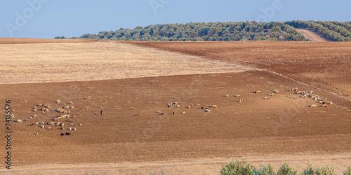 Foto auf AluDibond Schaf Herders met schapen, Marokko