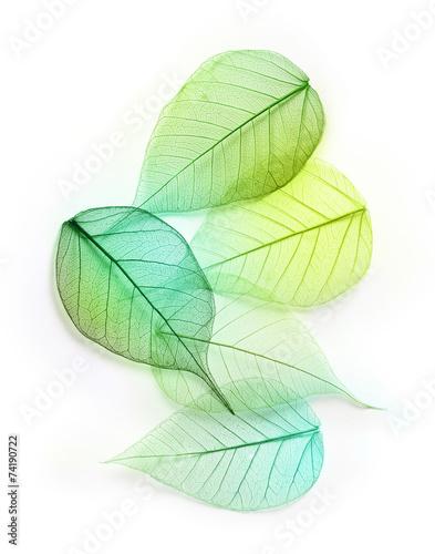 soczysta-zielen-lisci