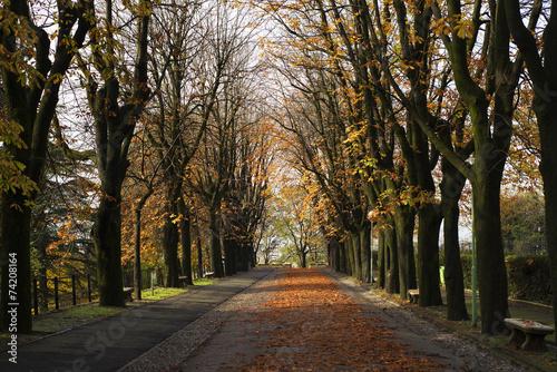 Fototapety, obrazy: avenue autumn