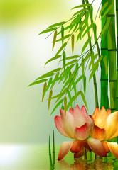 Seerose mit Bambus im Teich