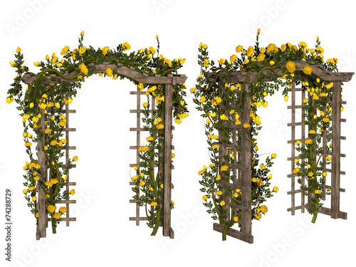 Fotografie, Tablou Romantic arbor with  yellow roses