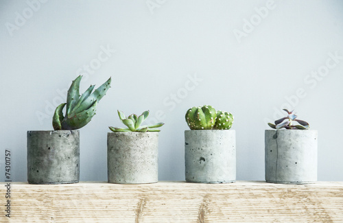 Foto Succulents in diy concrete pot. Scandinavian room interior decor