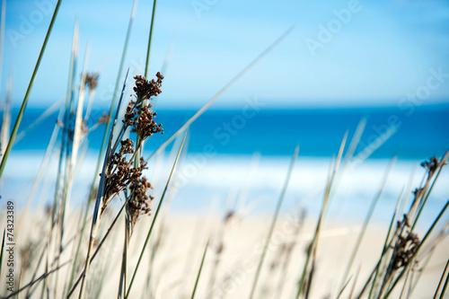 Gräser am Sandstrand #74323389