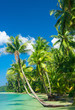 Exotic Paradise Jungle Lagoon
