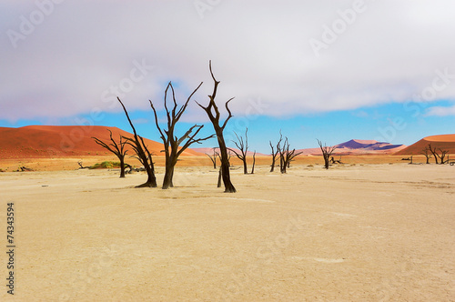 Staande foto Afrika Trees and landscape of Dead Vlei desert, Namibia, South Africa