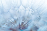 Blue abstract dandelion flower background, closeup with soft foc